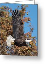 Eagle Banking Greeting Card
