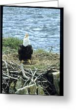 Eagle Calls In Its Mate Greeting Card