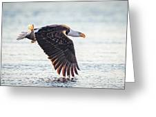 Eagle Catch Greeting Card