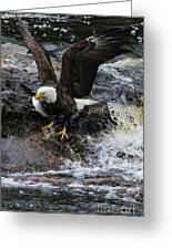 Eagle Catches Fish Greeting Card