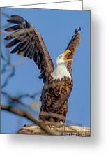 Eagle Excitement Greeting Card