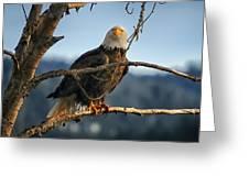 Eagle Eyed Greeting Card