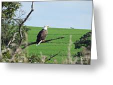 Bald Eagle Overlook Greeting Card