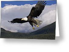 Eagle Flying In Sunlight Greeting Card by John Hyde - Printscapes
