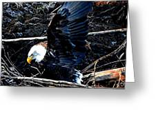 Eagle Getting Ready To Feed Greeting Card