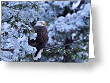 Eagle In A Frosted Tree Greeting Card