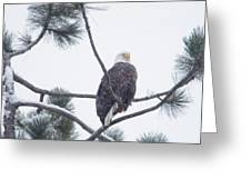 Eagle In A Pine Tree Greeting Card