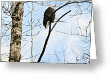 Eagle In A Tall Tree Greeting Card