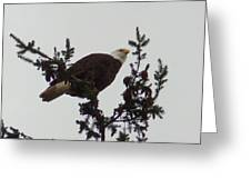 Eagle In A Tree Greeting Card
