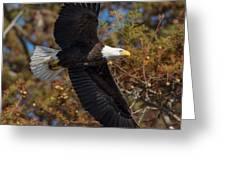 Eagle In Fall Greeting Card