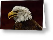 Eagle In Profile Greeting Card