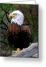 Eagle In The Night Greeting Card