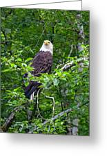 Eagle In Tree Greeting Card