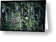 Eagle Landing On Nest Greeting Card