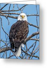 Eagle Mean Muggin Me Greeting Card