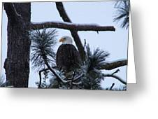 Eagle On A Frosted Limb Greeting Card