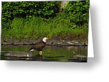 Eagle On A River Rock Greeting Card