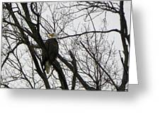 Eagle On Old Dump Road Greeting Card