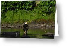 Eagle On River Rock II Greeting Card
