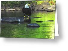 Eagle On River Rock IIi Greeting Card