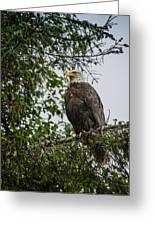 Eagle Feet Greeting Card