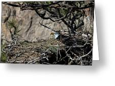 Eagle On The Nest, No. 3 Greeting Card