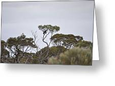 Eagle On The Nullarbor  Greeting Card