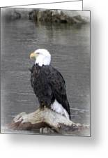 Eagle On The River Greeting Card