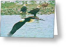 Eagle Over The River Greeting Card