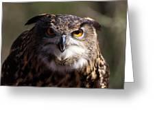 Eagle Owl 3 Greeting Card
