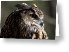 Eagle Owl 4 Greeting Card