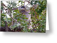 Eagle Owl Chick Greeting Card