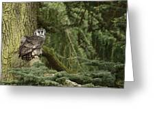 Eagle Owl In Forest Greeting Card