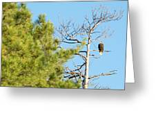 Eagle Perch Greeting Card