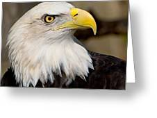 Eagle Power Greeting Card