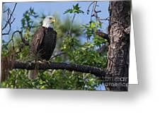Eagle Series 13 Greeting Card