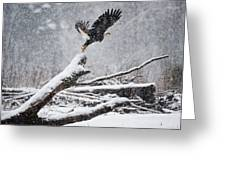 Eagle Takeoff In Snow Greeting Card