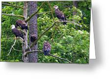 Eagle Tree Greeting Card