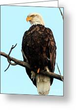 Eagle Watching Greeting Card