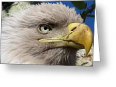 Eagle Wise Greeting Card