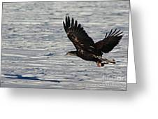 Eagle_7894 Greeting Card