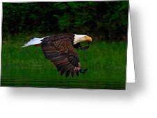 Eagle's Grace Greeting Card