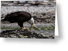 Eagle's Prize Greeting Card