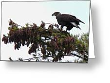 Eaglet In Pines Greeting Card