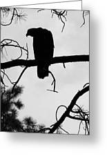 Eaglet Silhouette Greeting Card