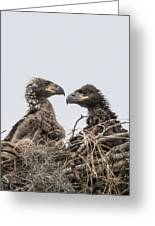 Eaglets Having A Chat Greeting Card