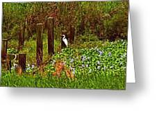 Egret And Heron Greeting Card