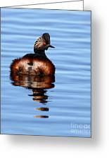 Eared Grebe Reflecting On Calm Water Greeting Card