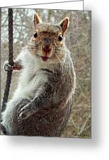 Earl The Squirrel Greeting Card