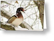 Early Arrival Greeting Card